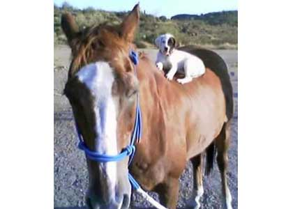 My mom was looking for a riding pardner!