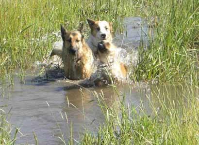 todie-buck-water