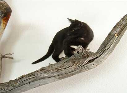 webcat3