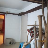 Open Cat Room