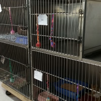 Isolation Cat Cage