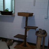 Middle Open Cat Room