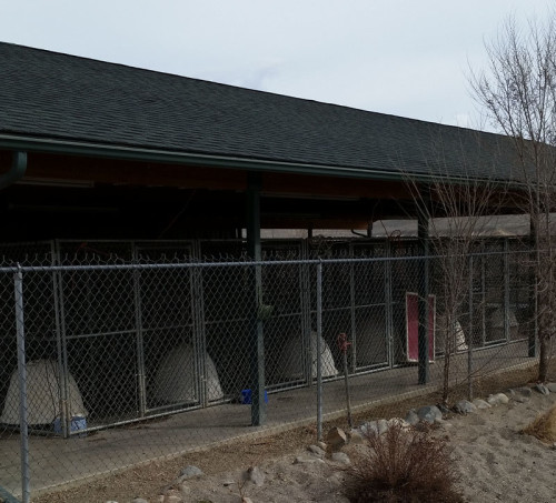 Isolation Dog Kennels